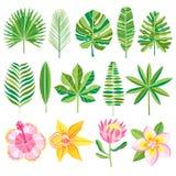 Set zieleni tropikalni liść również zwrócić corel ilustracji wektora Zdjęcie Stock