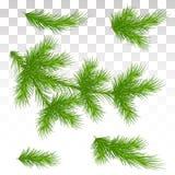 Set zielone sosnowe gałąź odosobniony Boże Narodzenia dekoruje Chri royalty ilustracja