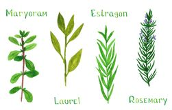 Set zielony herbsSet zieleni ziele, lebiodki, bobek, estragon, rozmaryn ilustracji