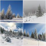 Set zima krajobraz Obraz Royalty Free