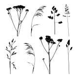 Set ziołowe sylwetki odizolowywać Zdjęcie Royalty Free
