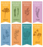 Set 8 ziołowych etykietek na ręka rysującym nakreśleniu Pionowo sztandary z basilem, świerząbek, rosemari, koper, mędrzec, estrag ilustracja wektor