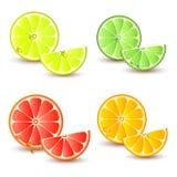 Set Zitrusfrucht stock abbildung