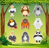 Set zwierzęcy majcher ilustracji