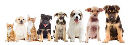 Set zwierząt domowych patrzeć Zdjęcia Royalty Free