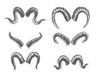 Set Zwierzęcy rogi Cakle, kózki Kreskowa sztuka Kolekcja ręka Rysujący rogi Atramentu set Zdjęcie Stock