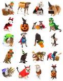 Set zwierzęta domowe w Halloweenowych kostiumach zdjęcie stock