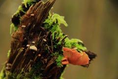 Seta anaranjada Imagen de archivo libre de regalías