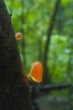 Seta anaranjada Foto de archivo libre de regalías