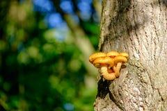 Seta anaranjada en tronco de árbol Imagen de archivo libre de regalías