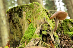 Seta beige en un tocón de árbol Foto de archivo libre de regalías