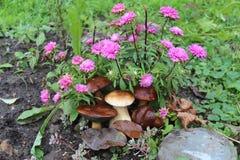 Seta blanca de la cosecha del otoño de las setas y de las flores fotografía de archivo