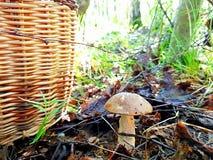 Seta comestible producida en el bosque fotografía de archivo