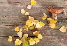 Seta de Brown y hojas de otoño amarillas Fotos de archivo libres de regalías
