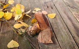 Seta de Brown y hojas de otoño amarillas Fotos de archivo