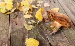 Seta de Brown y hojas de otoño amarillas Imagen de archivo