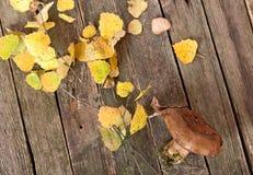 Seta de Brown y hojas de otoño amarillas Fotografía de archivo libre de regalías