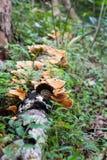 Seta de la belleza en árbol muerto Imágenes de archivo libres de regalías