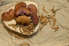 Seta de Lingzhi imagen de archivo libre de regalías