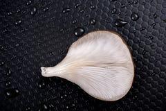 Seta de ostra o seta del ostreatus del Pleurotus Imágenes de archivo libres de regalías