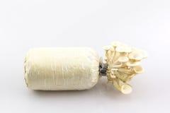 Seta de ostra que crece en la botella Fotografía de archivo libre de regalías