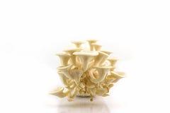 Seta de ostra que crece en la botella Imagen de archivo libre de regalías