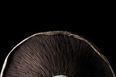 Seta de Portobello Imagen de archivo libre de regalías