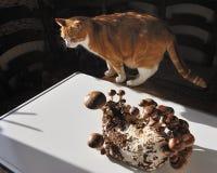 Seta de Shiitake y el gato. Imagenes de archivo