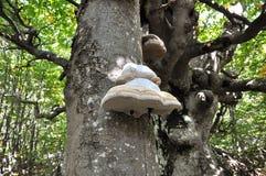 Seta del árbol Imágenes de archivo libres de regalías