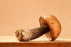 seta del boleto del Anaranjado-casquillo en tarjeta de madera Fotos de archivo