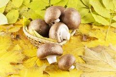 Seta del champiñón en hojas foto de archivo libre de regalías