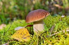 Seta del otoño Imagenes de archivo