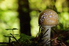 Seta en bosque imagen de archivo