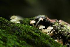 Seta en bosque en bosque Fotos de archivo