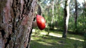 seta en el árbol Imagenes de archivo