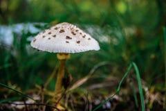 Seta en el bosque Imagen de archivo