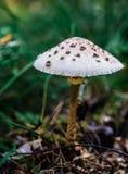 Seta en el bosque Imagen de archivo libre de regalías