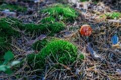 Seta en el bosque Fotografía de archivo