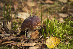 Seta en el bosque Fotografía de archivo libre de regalías