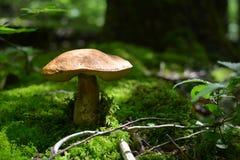 Seta en el bosque Imagenes de archivo