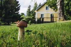 Seta en el césped cerca de la casa Fotografía de archivo