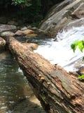 Seta en la madera al lado de la cascada en parque nacional imagen de archivo