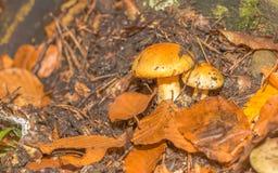 Seta en la montaña del bosque Foto de archivo