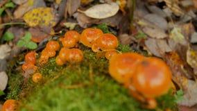 Seta en musgo en bosque metrajes