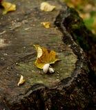 Seta en tocón de árbol Fotos de archivo