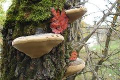 Seta en un árbol fotografía de archivo libre de regalías