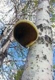 Seta en un árbol viejo Foto de archivo libre de regalías
