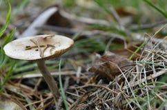 Seta en un bosque Foto de archivo libre de regalías
