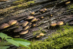 Seta en un tocón de árbol Fotos de archivo