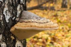 Seta en un tronco de árbol Fotografía de archivo